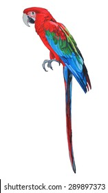 red-and-green macaw from Brazil South America in a hand painted tropical bird watercolor illustration in red green and blue colors