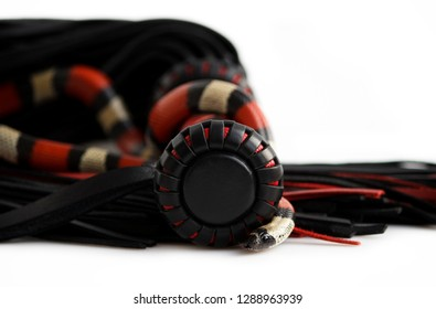 Red-black floger with a patterned handle and leather tails and young Scarlet kingsnake Lampropeltis elapsoides on white background. Nonpoisonous snake with a three colored, which characterizes mimicry