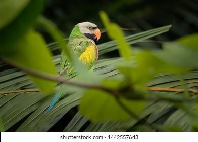 Parakeet Images, Stock Photos & Vectors | Shutterstock