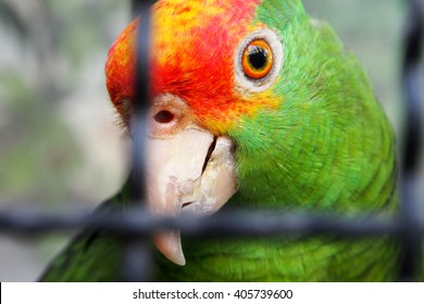 parrot cage images stock photos vectors shutterstock