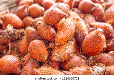 Reddish-brown scaly skinned Salak or snake fruits are being arranged for sale in the market