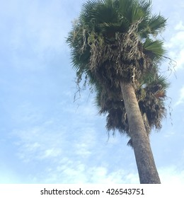 Redeo Los Angeles Vintge Palm Trees Vintage - clear summer skies great for any use.