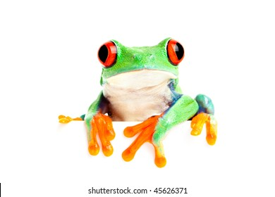 red-eyed tree frog (Agalychnis callidryas) isolated on white looking over edge - great for banner use and the like