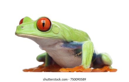 1000+ Amphibian Eyes Stock Images, Photos & Vectors | Shutterstock