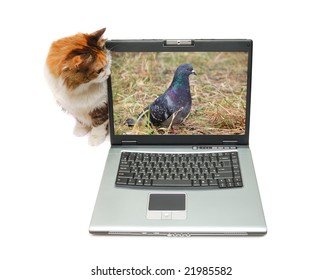 Red-haired cat is sitting near notebook isolated over white background