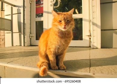 Red-haired cat with its tongue hanging out on the street near the house