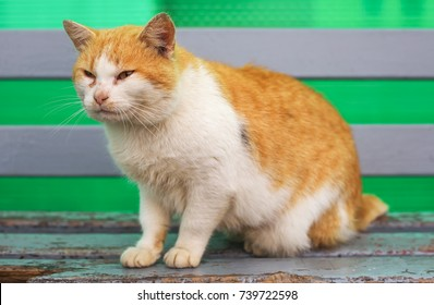 Red-haired dissatisfied cat sitting on an old bench