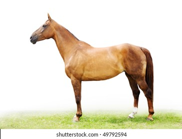 The red-haired horse (lateral view)
