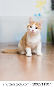 Red-haired little kitten sitting on the floor