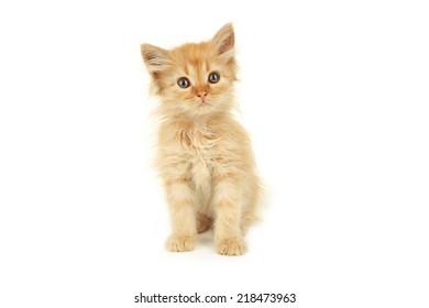 Redhead kitten isolated on white