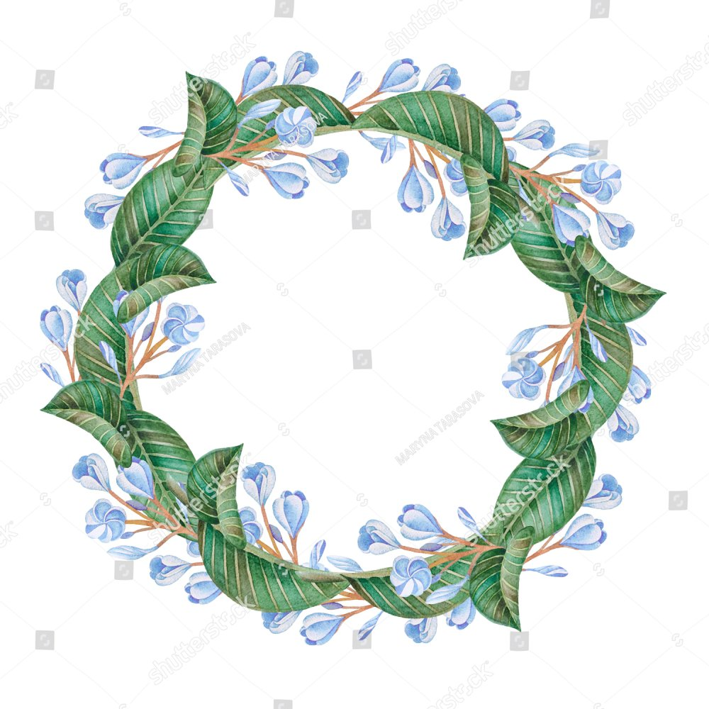 Illustration of watercolor hand drawn romantic wreath of blue illustration of watercolor hand drawn romantic wreath of blue flowers and green leaves isolated on white background flower frame for card and wedding izmirmasajfo