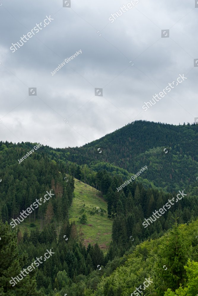 Aerial of scenic landscape, road through the olive garden | EZ Canvas
