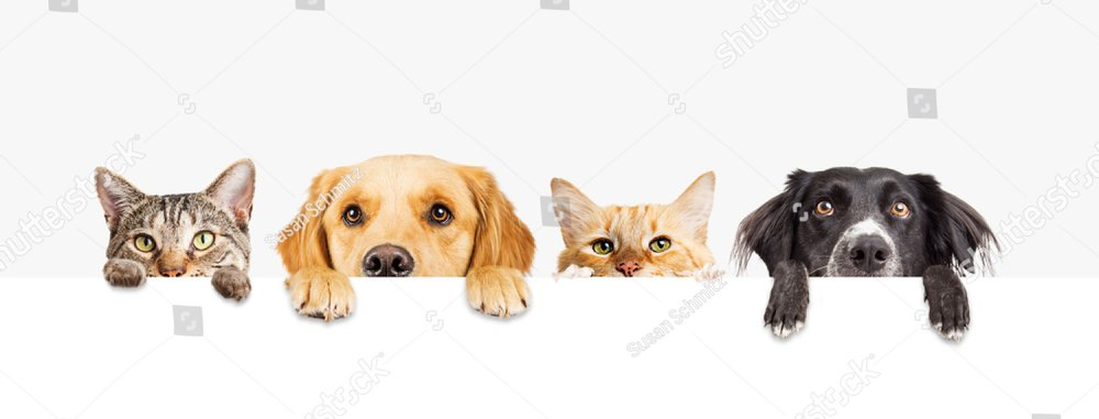 Row of the tops of heads of cats and dogs with paws up, peeking over a blank white sign. Sized for web banner or social media cover