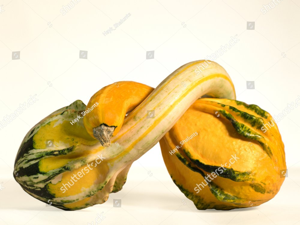 Pair of decorative Halloween pumpkins in pose of hugging each other or grouds isolated on white .