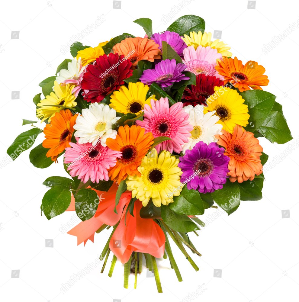Bouquet of colorful gerberas isolated on white background beautiful bouquet of colorful gerberas isolated on white background beautiful natural flowers for a gift ez canvas izmirmasajfo