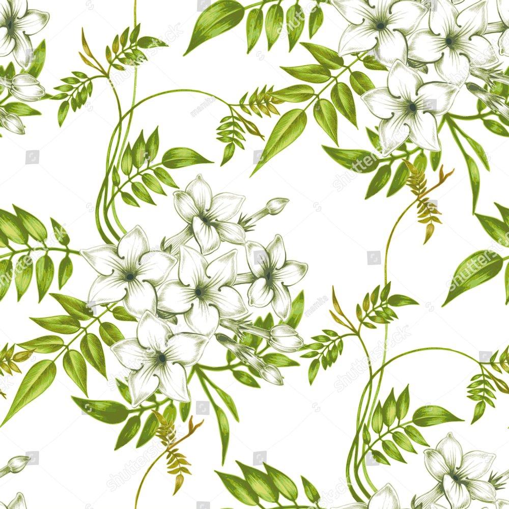 Vector Seamless Background Jasmine Flowerssign For Fabrics