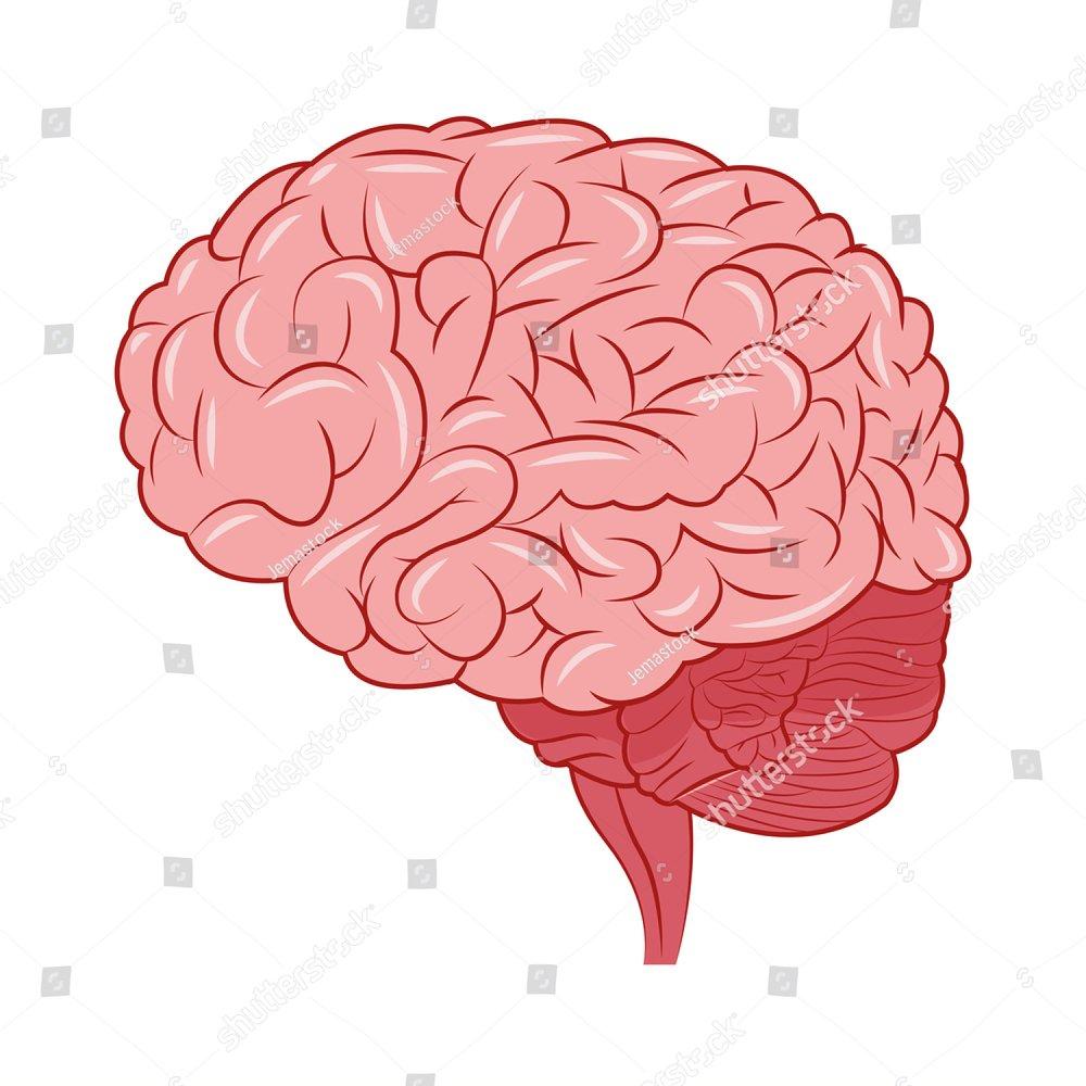 human brain icon   EZ Canvas