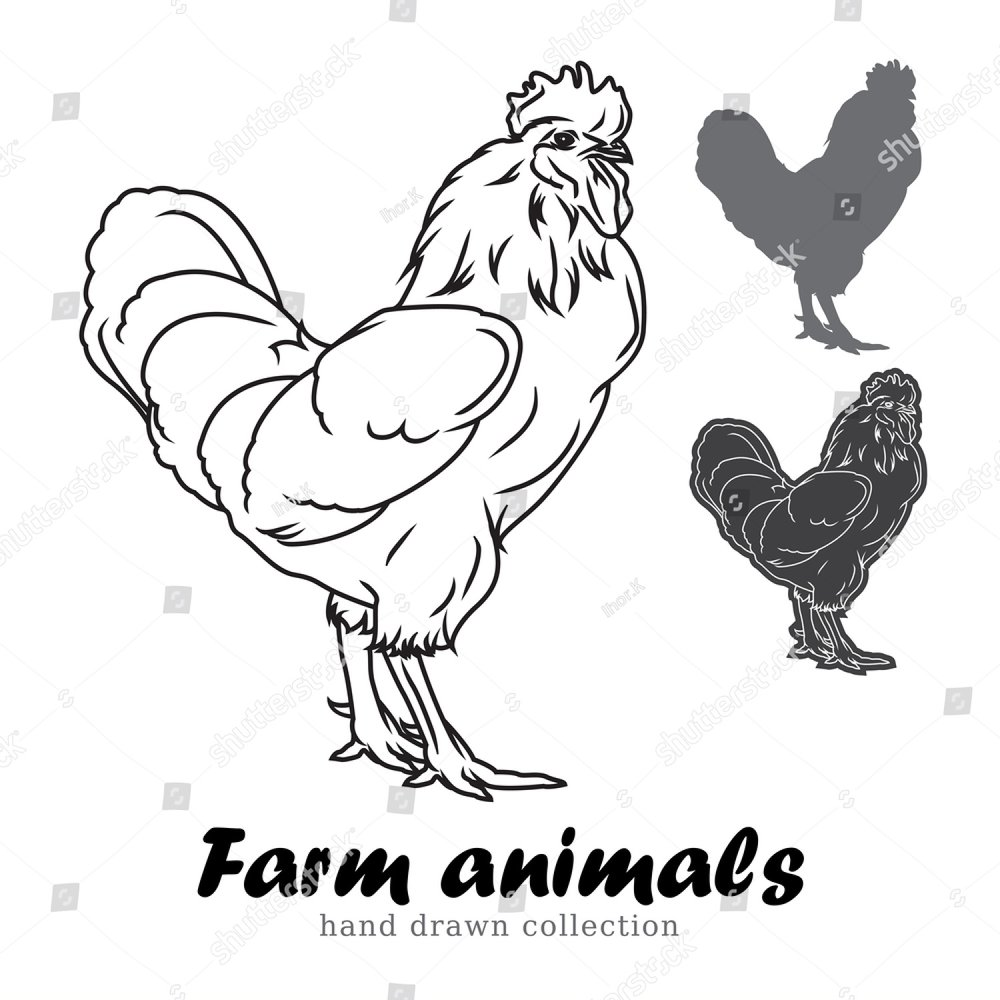 drawn hens and rooster isolated on white background black and