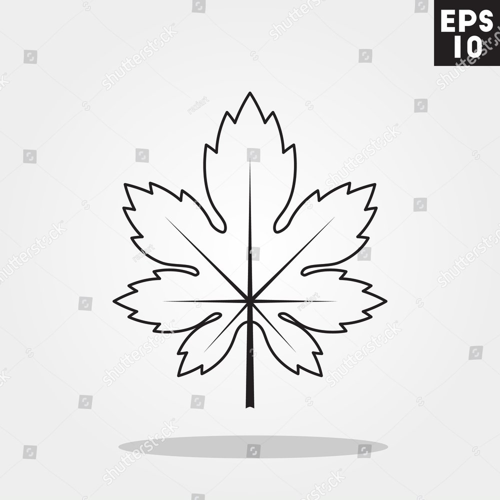 Maple Leaf Gravure Leaf Of A Maple Style Vector Black Sketch