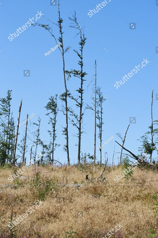 Two Dead Trees at the Douglas Family Preserve in Santa Barbara | EZ ...