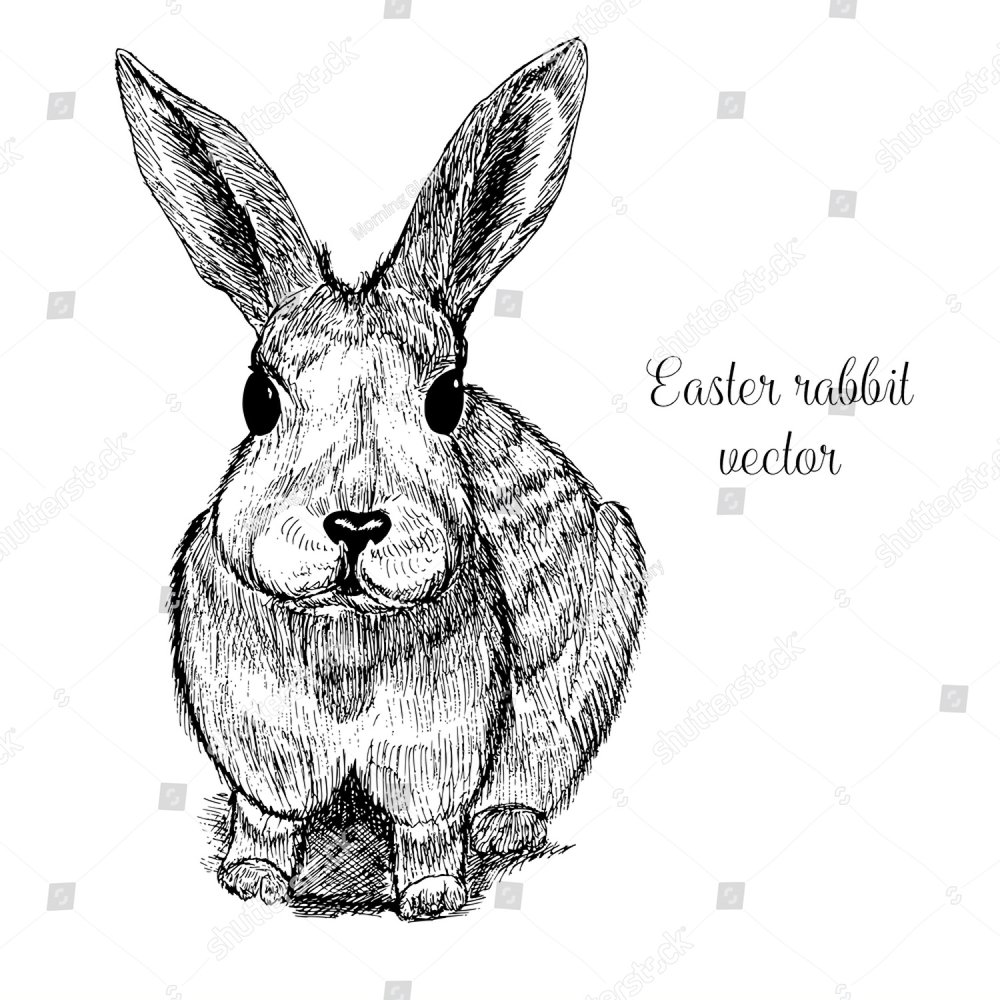 Vintage Easter Rabbit ink sketch isolated on white background. One ...