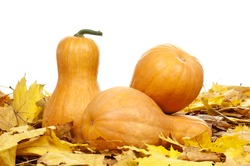 Many pumpkins of different shapes and sizes surrounded by leaves on white background