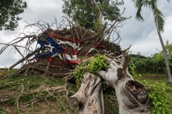 SAN JUAN, PR - MARCH 4, 2018: Painted USA flag on uprooted tree from Hurricane Maria in San Juan, Puerto Rico.