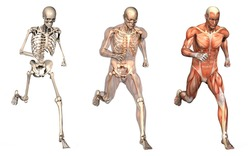 Series of three anatomical 3D renders depicting a man running, viewed from the front. These images will line up exactly, and can be used as overlays to study anatomy.