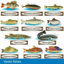 Illustration of different kind of fishes, along with their Latin names.