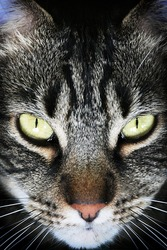 Dramatic, vertical portrait of a black tabby cat with green eyes.
