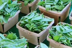 Snow peas in baskets at market