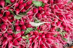 Radishes at market