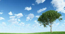 Tree on the grass with Sky Background