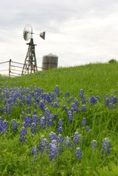 Bluebonnets and windmill in the Texas Hill Country