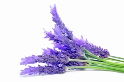 closeup of a bunch of lavender flowers on a white background