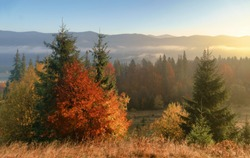 Beautiful golden trees and misty daybreak in a hills peaks in foggy autumn morning.