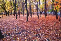 Autumn forest and trees with red and yellow leaves
