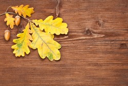 Oak branch with leaves and acorns over wooden background
