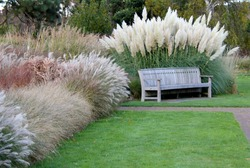 Park bench nestling in various grasses and pampas