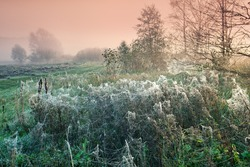 Cobwebby meadow at misty sunrise