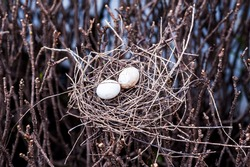 bird egg and net on dry tree
