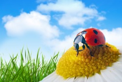 ladybug on flower under blue sky with clouds