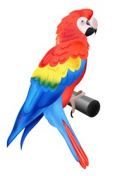 Colorful parrot macaw isolated on white background. Vector illustration for your bird wildlife design. Vivid bird sitting on perch.