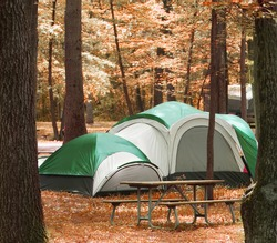 tent located between trees in the woods