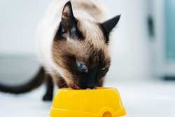 cat eating pet food