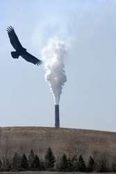 eagle flying over smokestack, harming the environment.