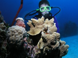 Young male scuba diver poses behind a coral head.