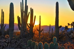 Fifth Sunset at Saguaro National Park near Tucson Arizona.