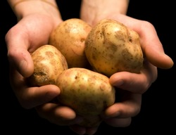 Mans Hands Holding Potatoes