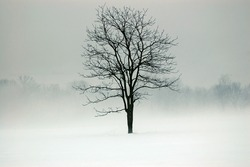 tree in a field surrounded by fog and snow